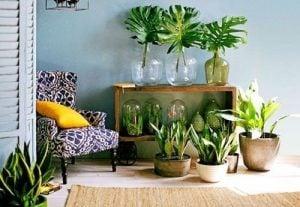 plantas-interior
