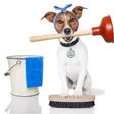 limpieza orina de perro